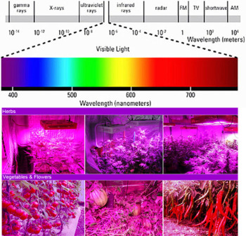 RAYWAY LED Grow Light Chip Augalų Augimo Šviesos Šaltinis Red 660nm Blue 460nm